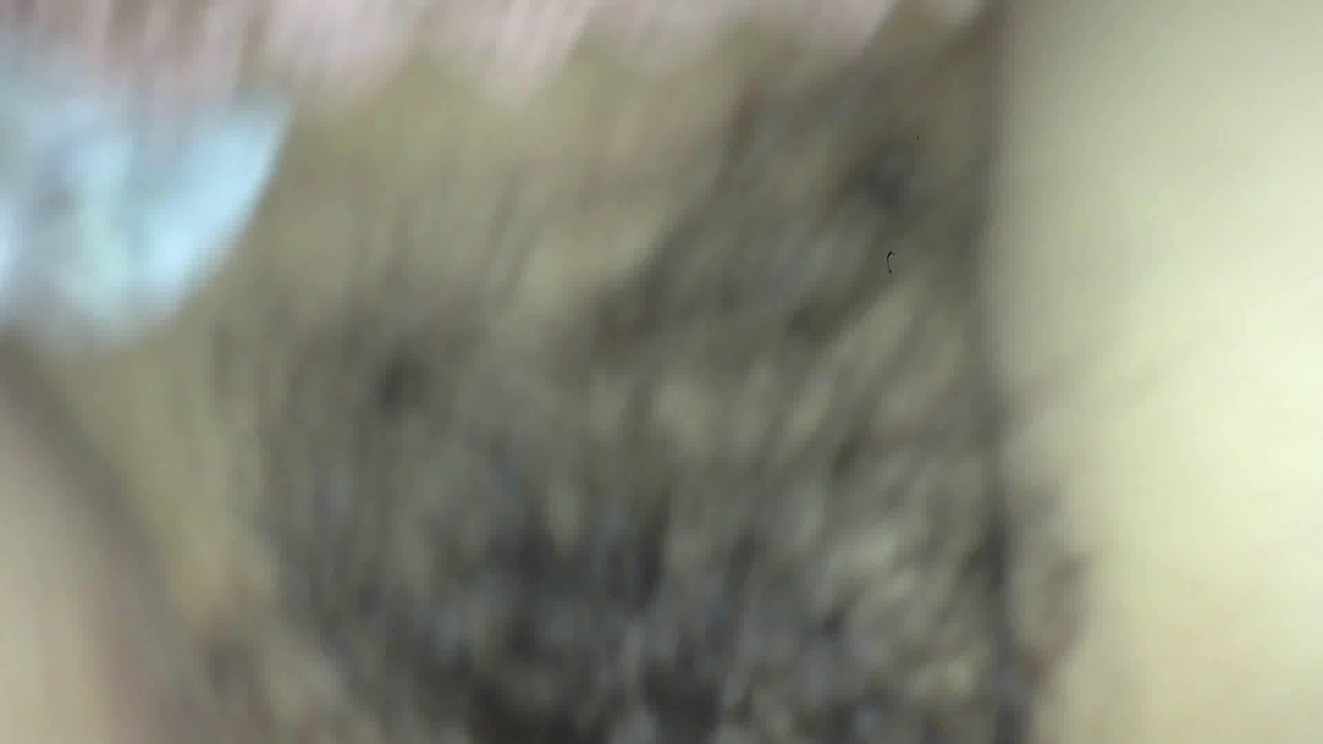 ヒトニアラズvol.5 セックス おまんこ無修正動画無料 112枚 50